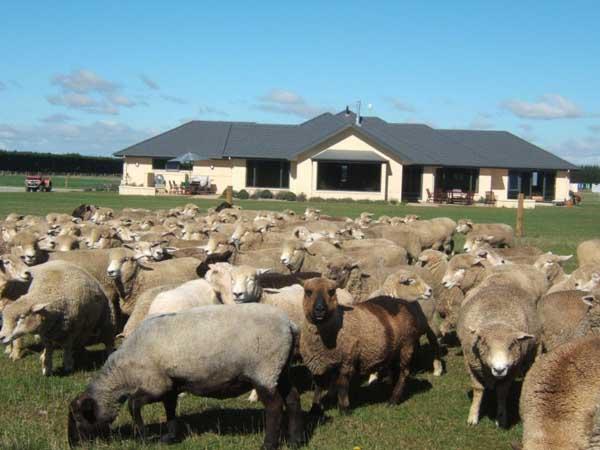 Petes Farm Stay